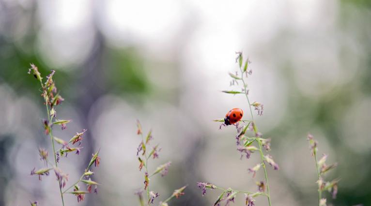 insectes jardin