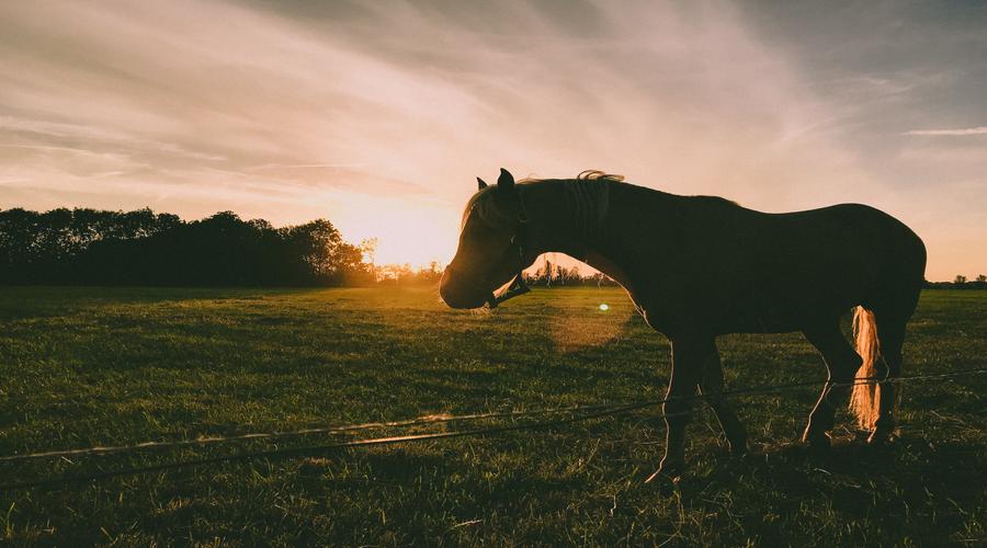 cheval, pré, lumière