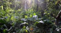 Permaculture : bienvenue en Belgique, à la ferme des fraternités ouvrières