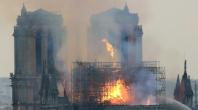 Des chênes pour Notre-Dame: la forêt française se mobilise