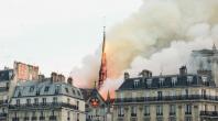 Les abeilles de Notre-Dame ont survécu à l'incendie