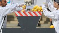 L'élimination des poussins mâles, pratique controversée de l'industrie agroalimentaire
