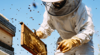 Réchauffement climatique : la production de miel en crise