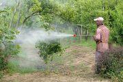 Agriculteur pulvérisant une solution sur des arbres fruitiers