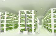 Les plans de l'usine à salades de Toshiba