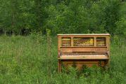 Piano abandonné au milieu des herbes hautes