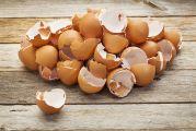 tas de coquilles d'œufs déposé sur une planche en bois