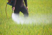 Épandage manuel de pesticide dans un champs