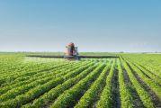 Champg de soja OGM