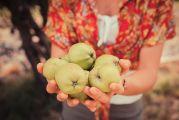 Monodiète de pomme