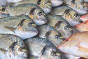 Liste des poissons contaminés au mercure