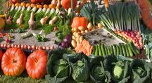 légumes d'automne disposés à même le sol