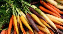 Lot de carottes de différentes couleurs sur l'herbe