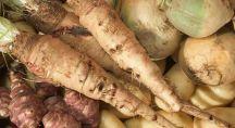 Deux salsifis au milieu d'autres légumes anciens