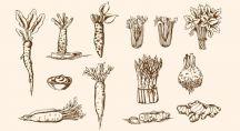 Régulièrement, nous vous proposons de redécouvrir les bienfaits nutritifs des légumes anciens qui sont peu à peu tombés dans l'oubli. Mais pourquoi ces légumes ont-ils été oubliés ?