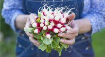 Femme tenant une botte de radis