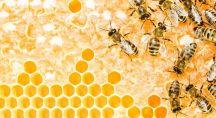 Une dizaine d'abeilles dans une ruche