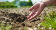 Femme plantant des semences dans la terre