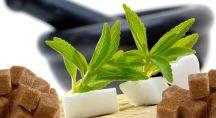 feuilles de stévia et sucres au premier plan