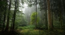 Brume dans un sous bois