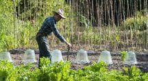 un jardiner jardine dans son potager bio