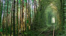 un chemin dans une forêt