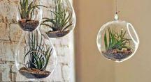 décoration de plantes succulentes suspendues