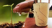 Planter une tasse à café biodégradable pour faire pousser un arbre