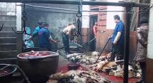 des hommes tuent des chiens pour leur peau