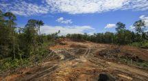 Déforestation à cause de l'huile de palme