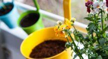 des pots bleus, verts et jaunes à coté d'une fleur jaune