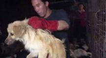 Marc Ching en train de secourir un chien à Yulin