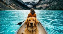 un chien dans une barque au Canada