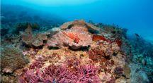 les fonds marins et des coraux