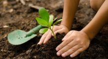 un enfant plante un arbre