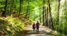 un couple qui marche en forêt