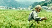 Fukuoka dans sa rizière naturelle