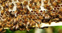 des abeilles qui fabriquent du miel dans une ruche