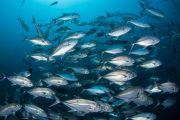 des poissons nageant dans l'océan