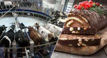 du lait de la ferme aux 1000 vaches dans des bûches de Noël