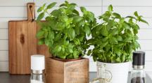 des plantes aromatiques dans une cuisine