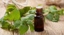 La menthe poivrée, les bienfaits d'une huile essentielle stimulante