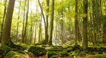 des arbres dns une forêt qui se parlent