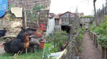 La Recyclerie : une ferme urbaine en plein cœur de Paris