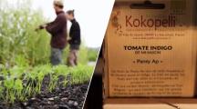 Gérant de l'association Kokopelli en train de vérifier ses plantes