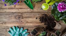 Les bienfaits insoupçonnés du jardinage sur la santé
