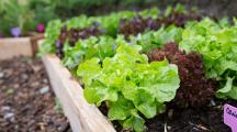 Permaculture comment entretenir son jardin en mai