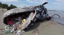 Baleine déchet sur une plage des Philippines