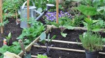 Avec Oasis Citadine, louez un potager prêt-à-cultiver