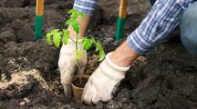 Comment cultiver plus en faisant moins avec la permaculture ?